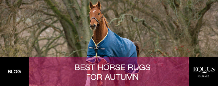 Best Horse Rugs For Winter