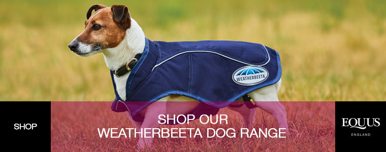 Shop Weatherbeeta Dog Range