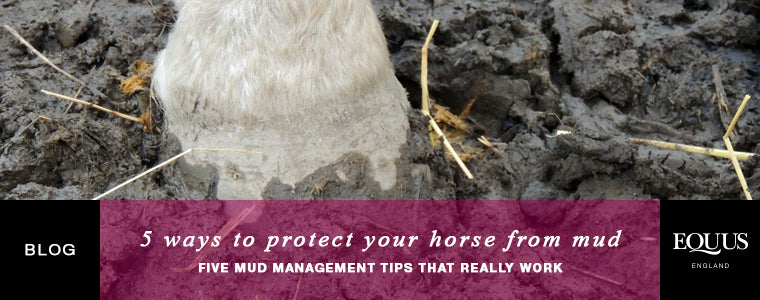 5 ways to protect your horse from mud