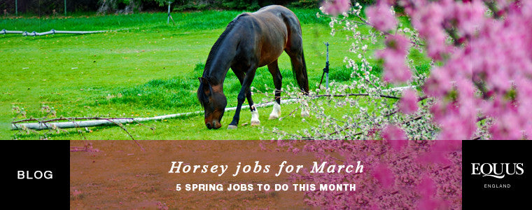 Horsey jobs to do during March