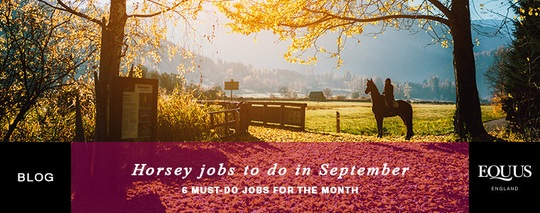 Horsey jobs to do in September
