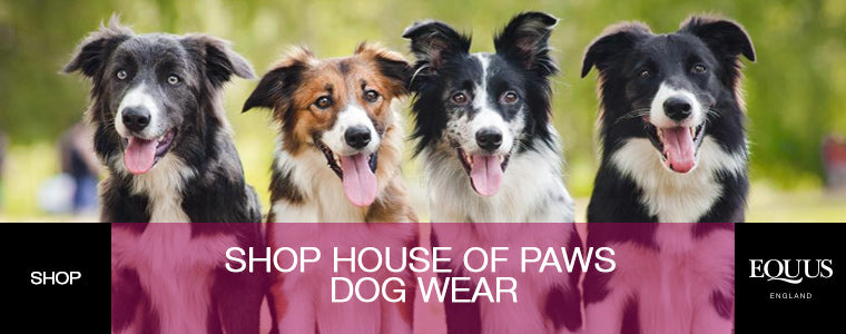 House of Paws Shop Now