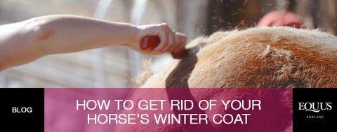 Top tips to get rid of your horse's winter coat...quickly!