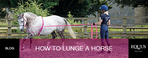 How to lunge a horse