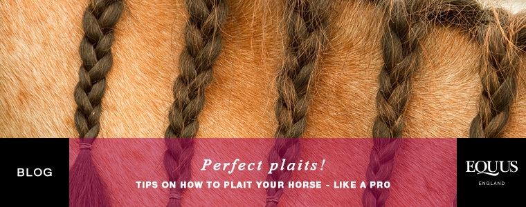 How to plait a horse