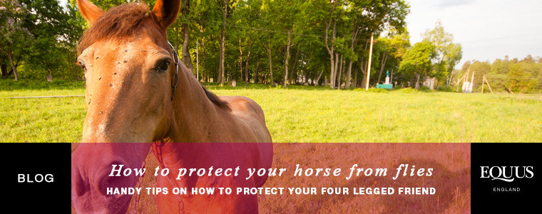 How to protect your horse from flies