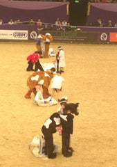 hoys 2014 double harness scurry start