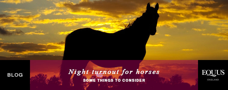 Night turnout for horses