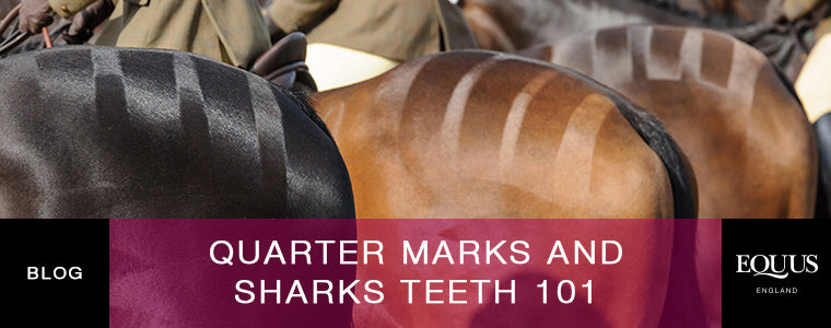 Quarter Marks and Sharks Teeth 101