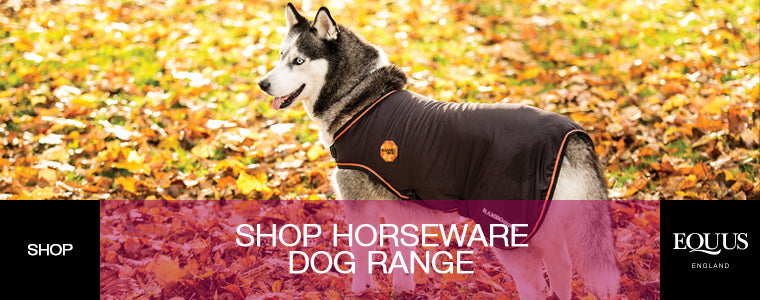 Shop Horseware Dog Range