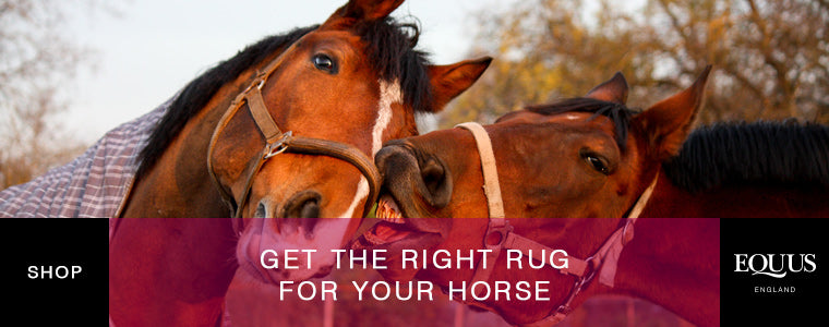 Shop horse rugs online