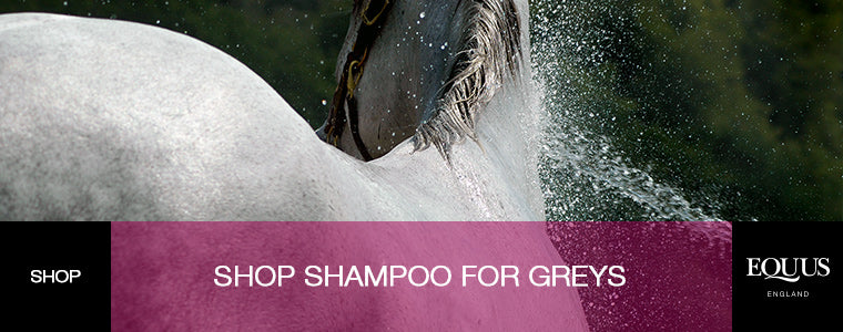 Shop Shampoo for Greys