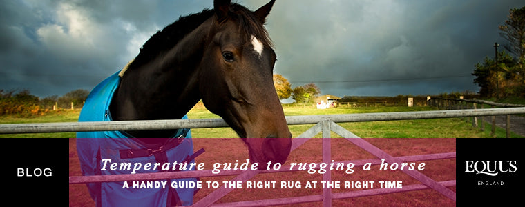 Temperature guide to rugging a horse