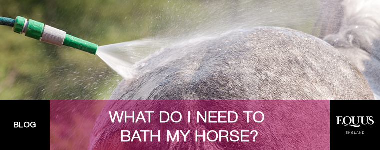 What do i need to bath your horse?