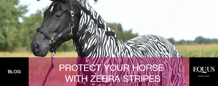 Protect Your Horse With Zebra Stripes