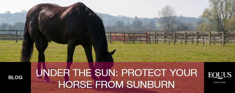 Under The Sun: Protect Your Horse From Sunburn