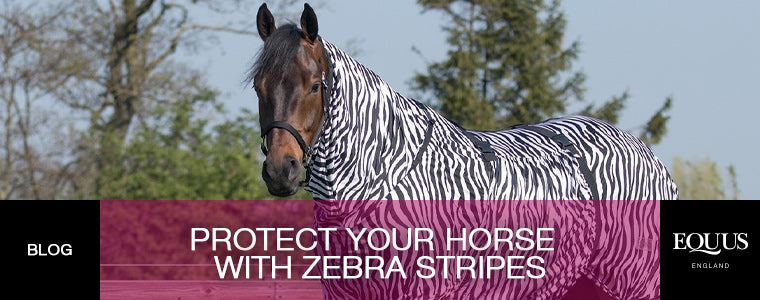 Protect your horse from flies and midges with zebra stripes