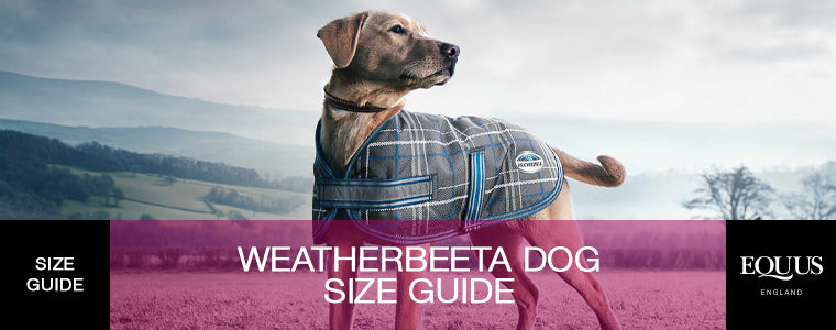Weatherbeeta Dog Size Guide