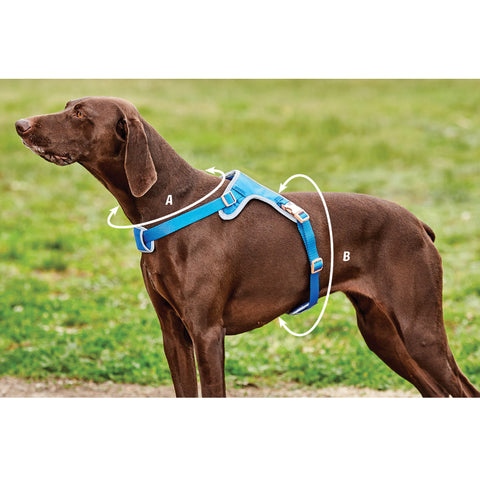 Weatherbeeta Elegance Dog Harness Size Guide Image