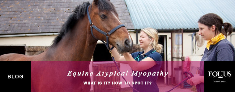 What is equine atypical myopathy?