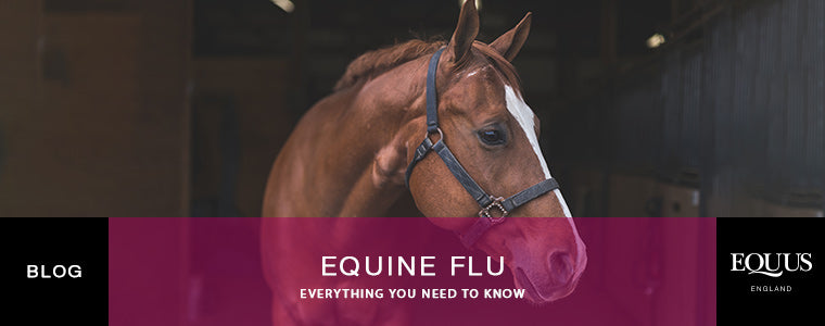 What is equine flu