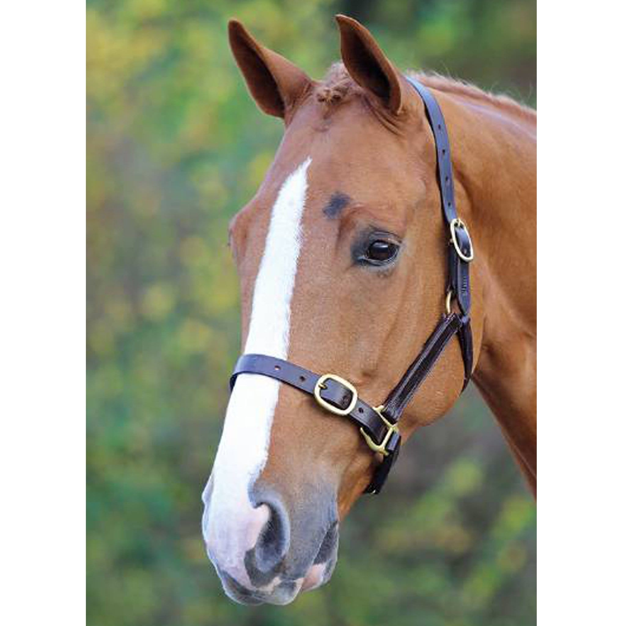Shires Blenheim Fully Adjustable Leather Headcollar 373B