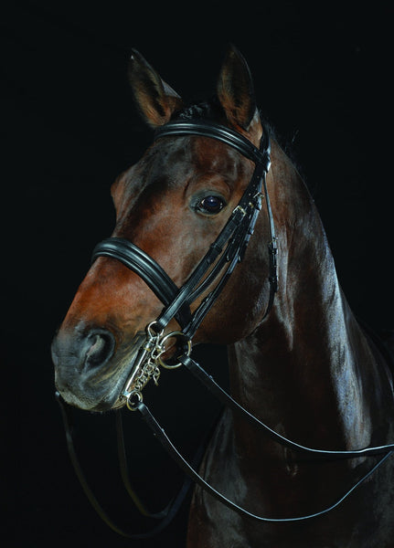 Collegiate Padded Headpiece Raised Weymouth Bridle Black 589756