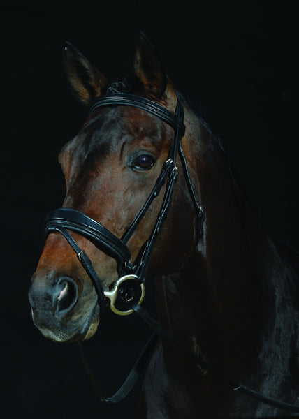 Collegiate Padded Shaped Raised Noseband Flash Bridle Black 591035