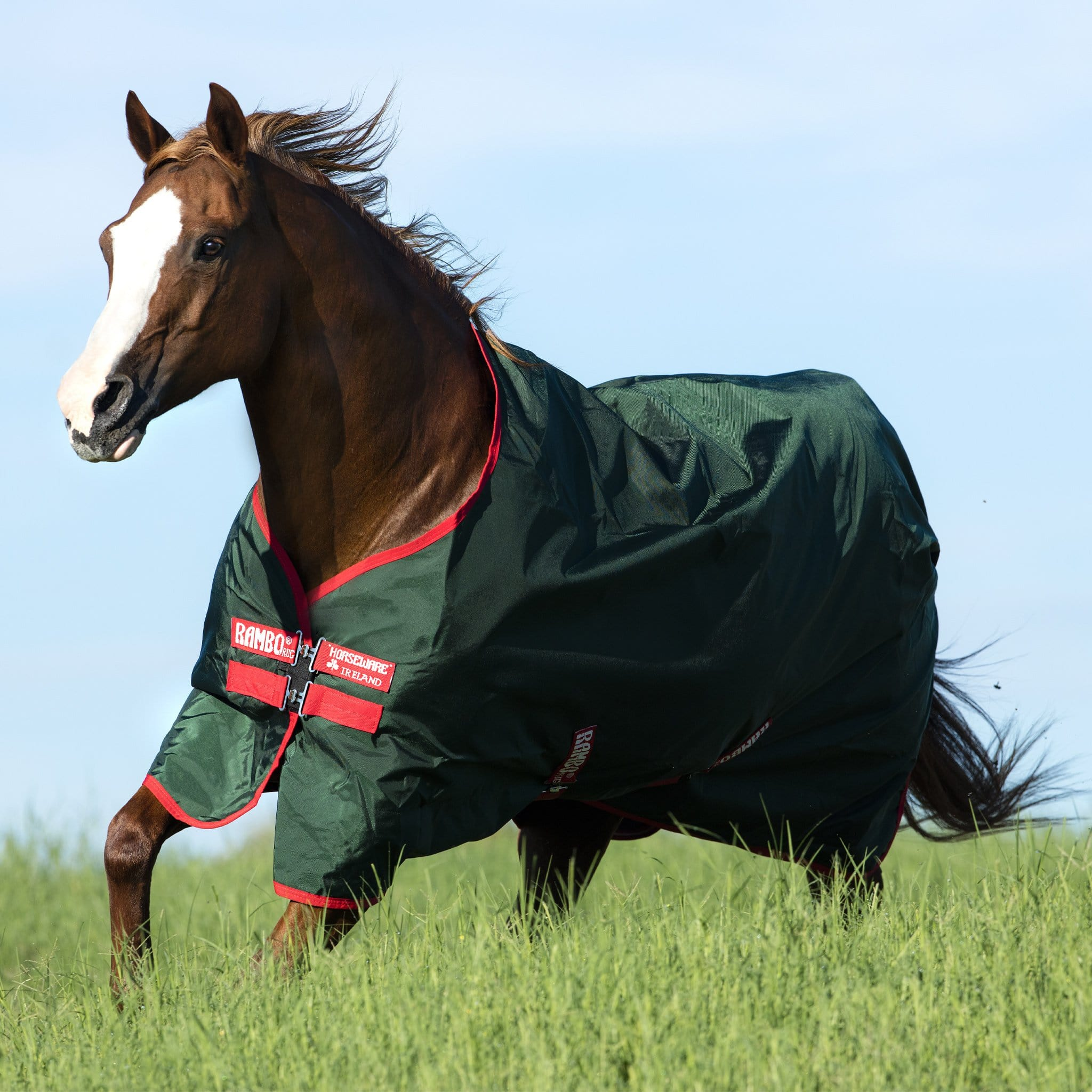 Rambo Original 0g Lite Standard Neck Turnout Rug Green AAAA03 On Chestnut Horse In The Field.