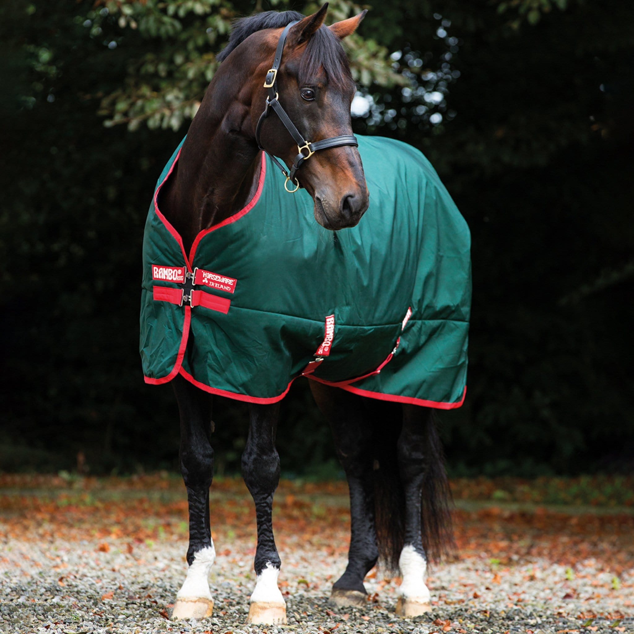 Rambo Original 0g Lite Standard Neck Turnout Rug Green AAAA03 On Bay Horse Front View.