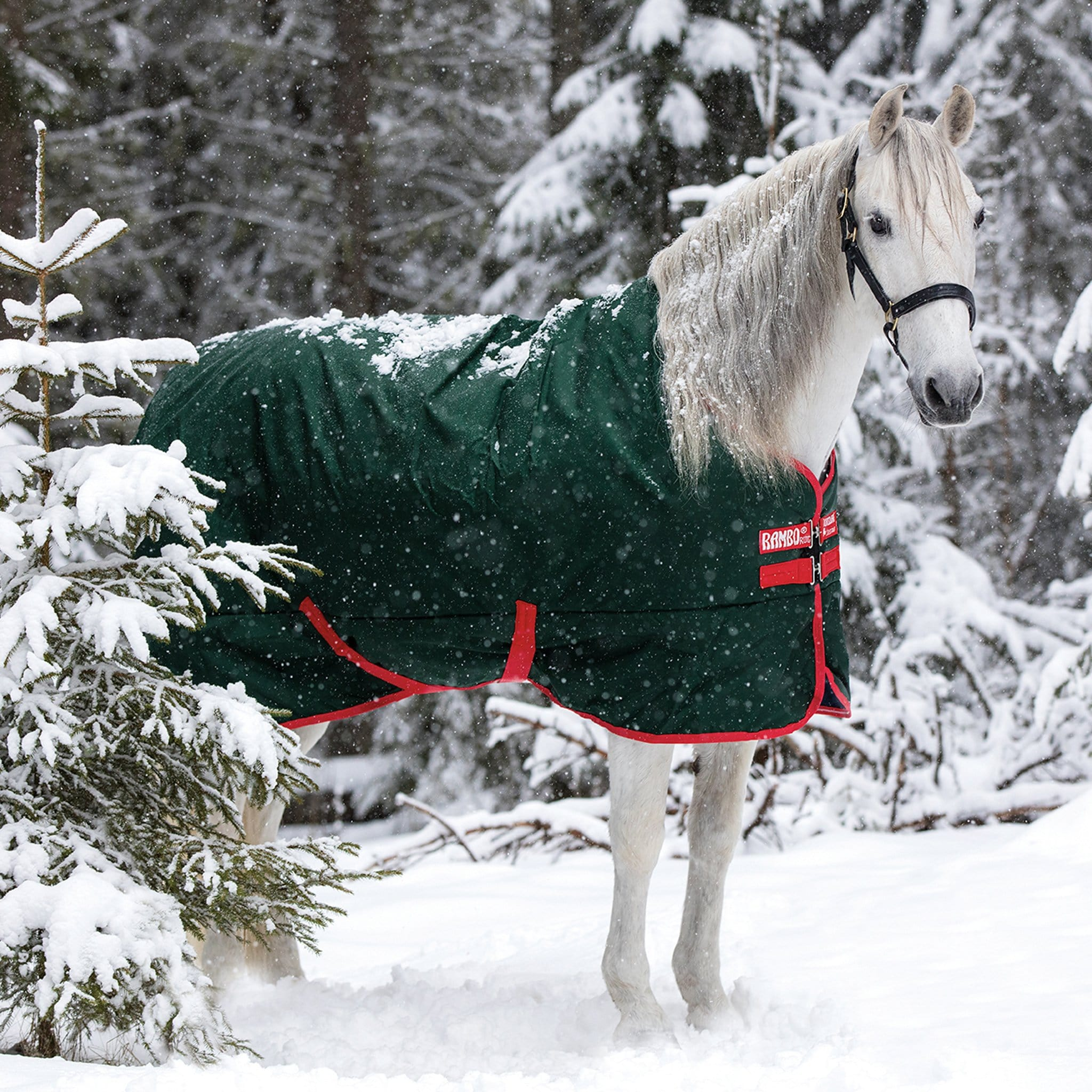 Rambo Original 400g Heavyweight Standard Neck Turnout Rug Green AAAA03 On Grey Horse In The Snow.