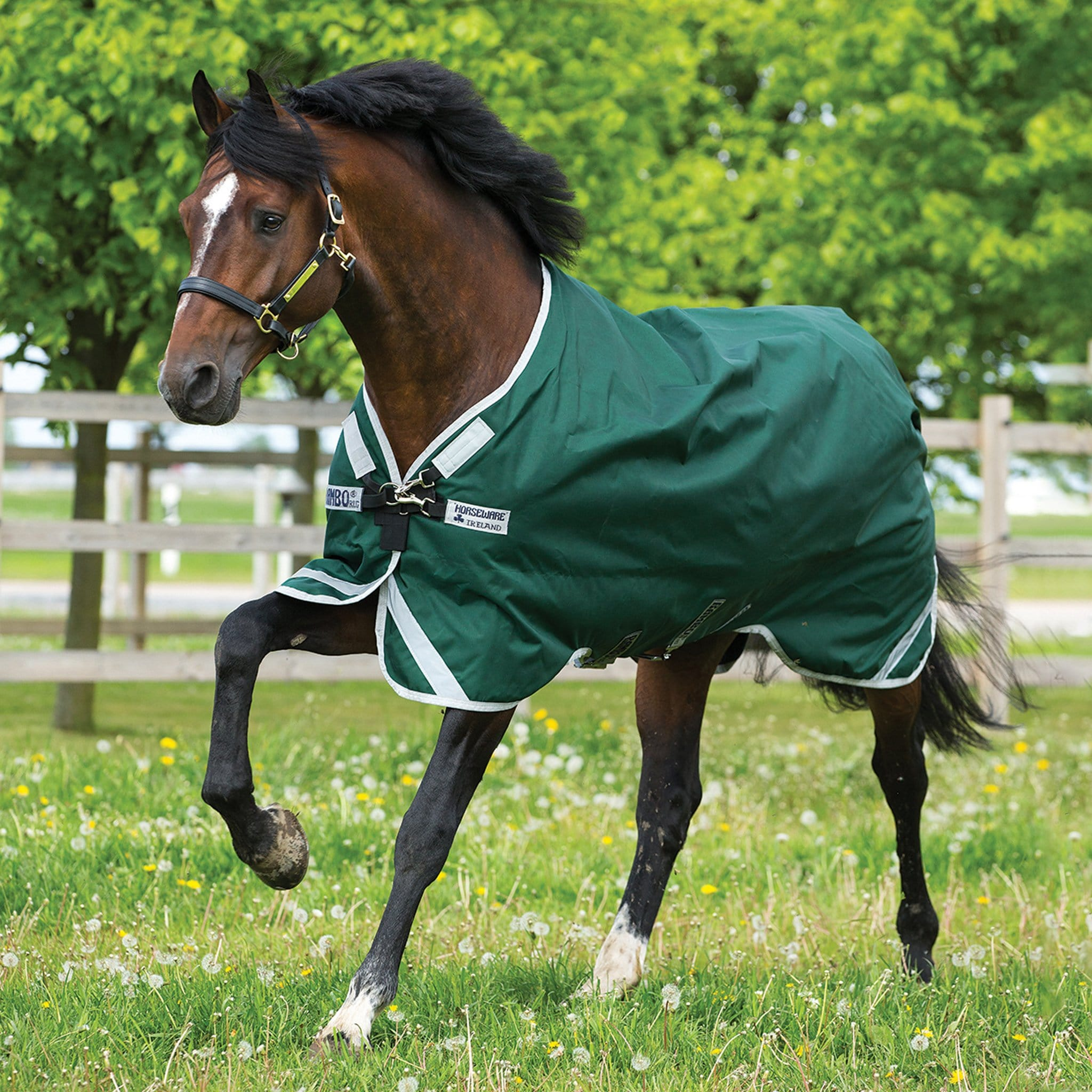 Rambo Original with Leg Arches 0g Lite Standard Neck Turnout Rug AAAA98 Green With Silver Trim On Bay Horse In The Field