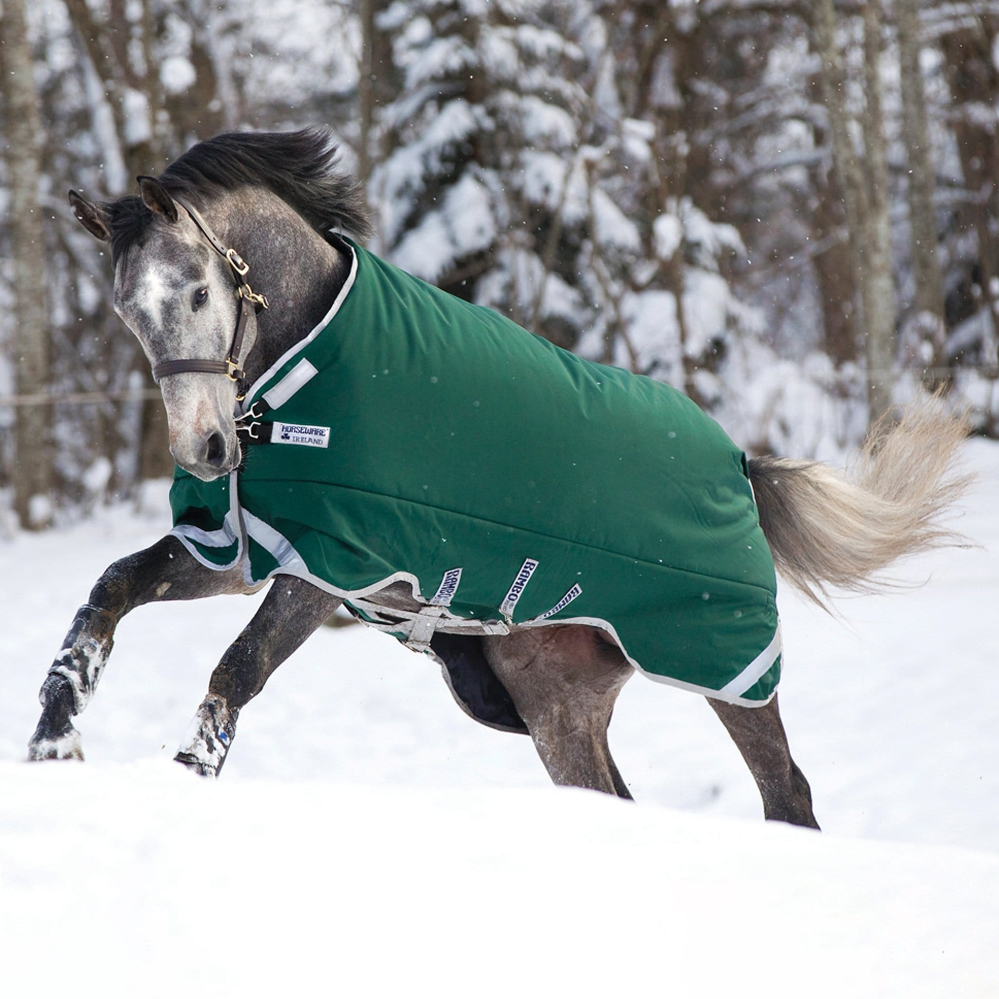 Rambo Original with Leg Arches 400g Heavyweight Standard Neck Turnout Rug AAAA98 Green With Silver Trim On Grey Horse.