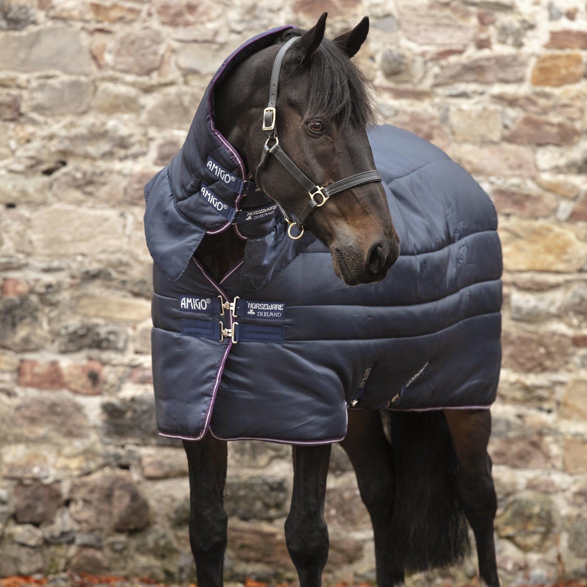 Amigo Insulator All-in-one Heavyweight 350g Combo Neck Stable Rug Navy ABRJ23.