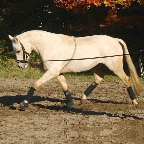 Busse Cotton Lunging Aid 128023