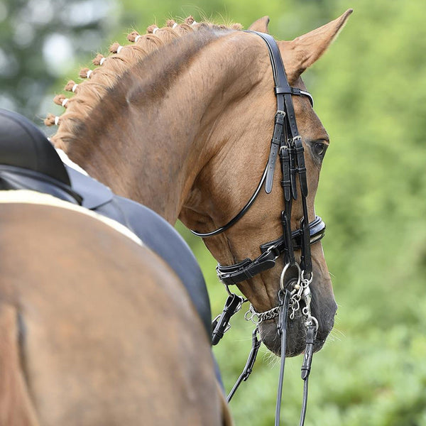 Busse Mailand Double Bridle Rear View 120905