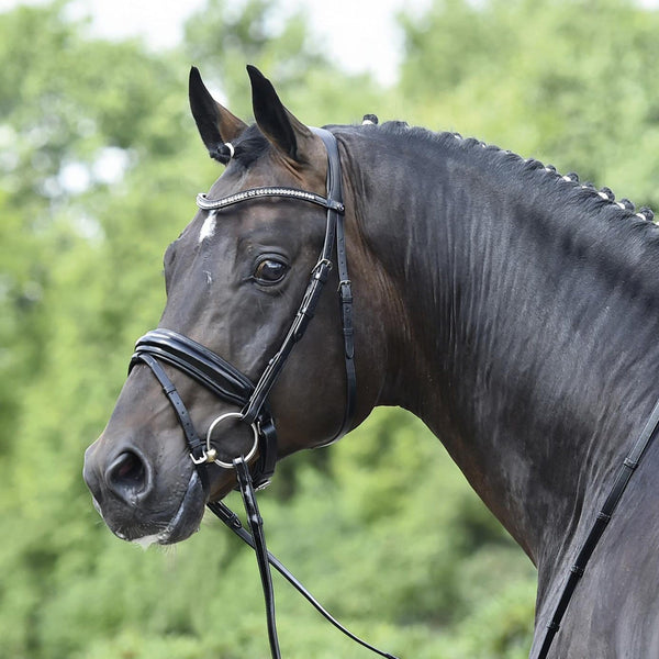 Busse Massa Bridle Alternative View 120902