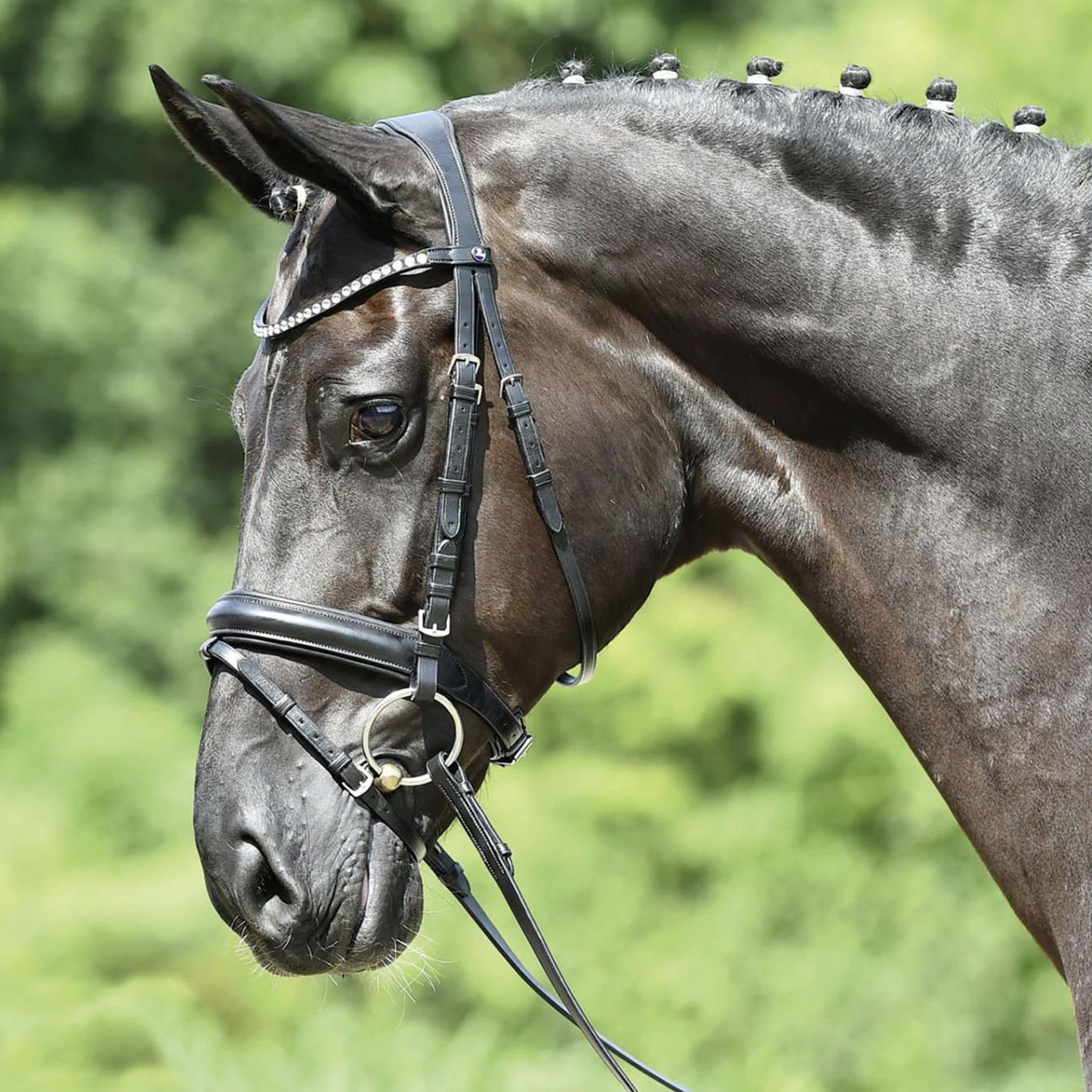 Busse Matera Bridle Black 120901