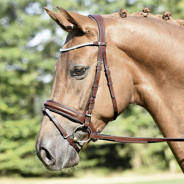 Busse Matera Bridle Brown 120901