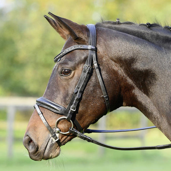Busse Solibel Fame Bridle Black 120078