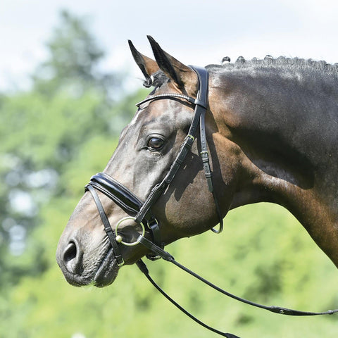 Busse Mailand Bridle Side View 120904