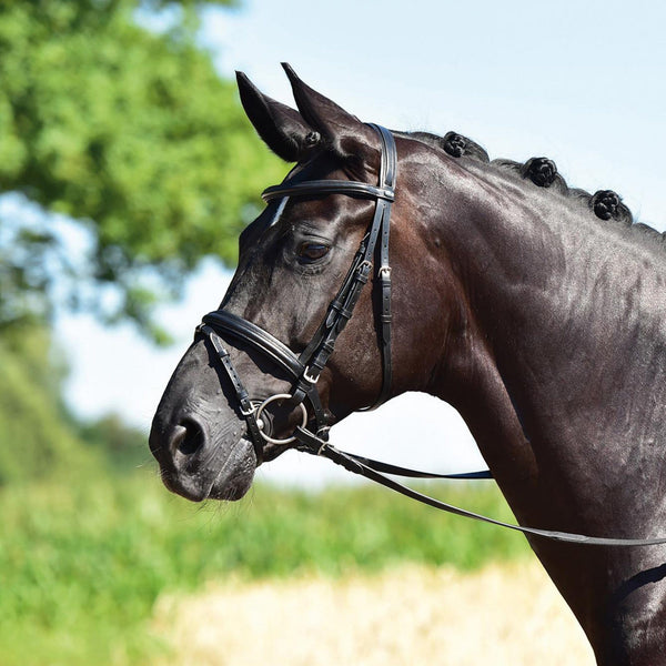 Busse Solibel Professional Soft Bridle Black 120040