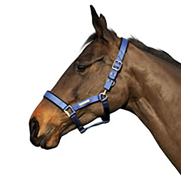 Cottage Craft Tex Turnout Safe Headcollar Blue COT5025
