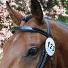 Equetech Bridle Competition Numbers - White | EQUUS