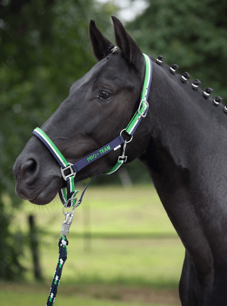HKM Pro Team Global Team Headcollar worn by Horse
