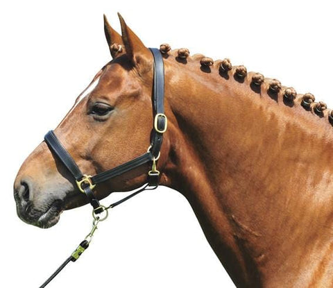 HKM Padded Leather Headcollar with Brass Fittings in Black