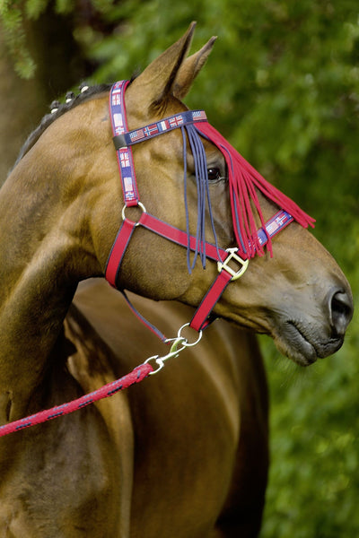 HKM Pro Team International Headcollar worn by Horse