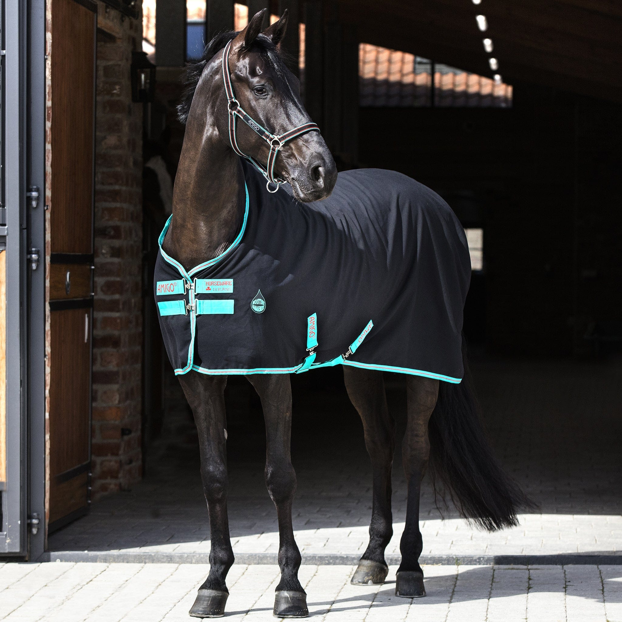 Amigo Stable Sheet Black Front View ADRF22.