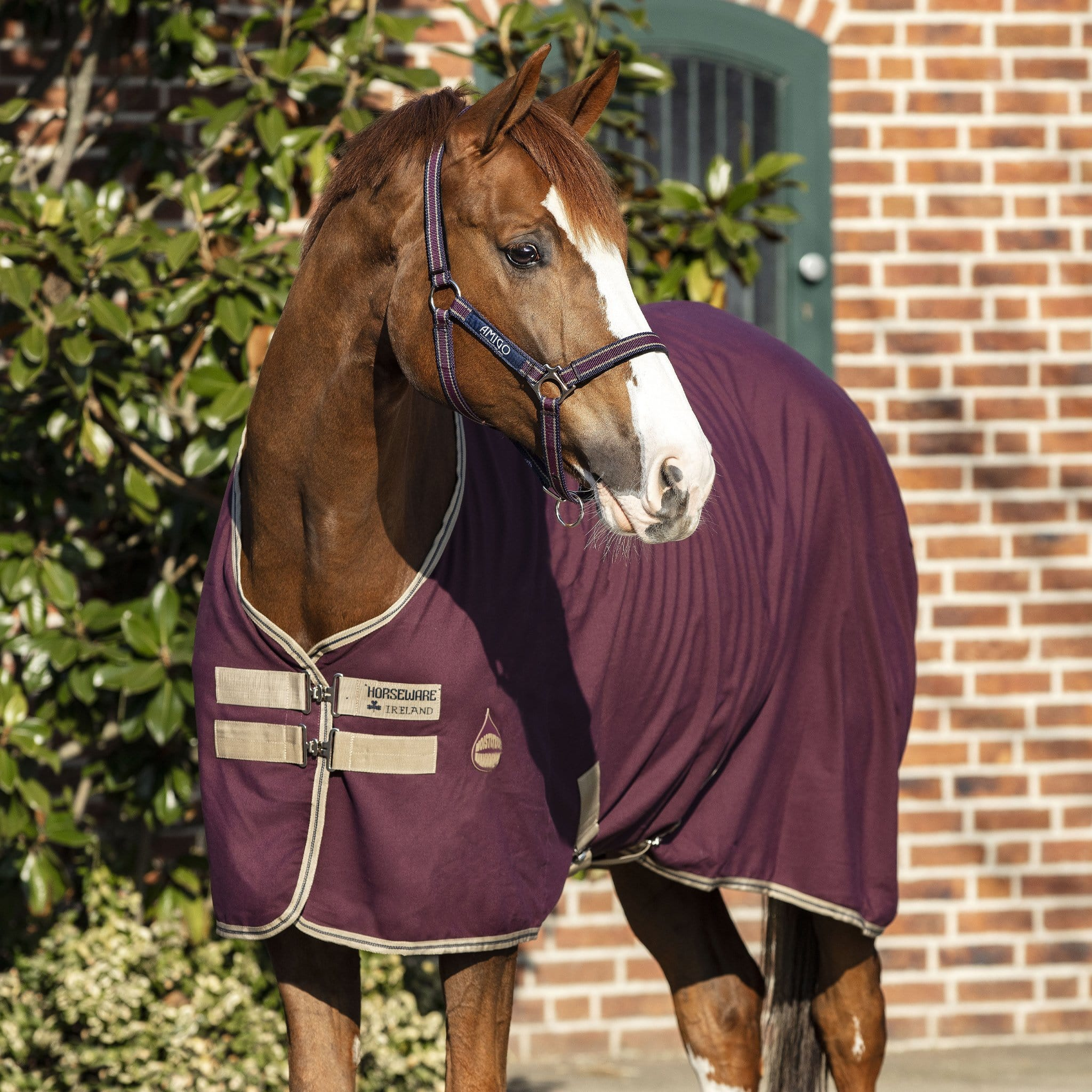 Amigo Stable Sheet Fig, Navy and Tan Front View ADRF22