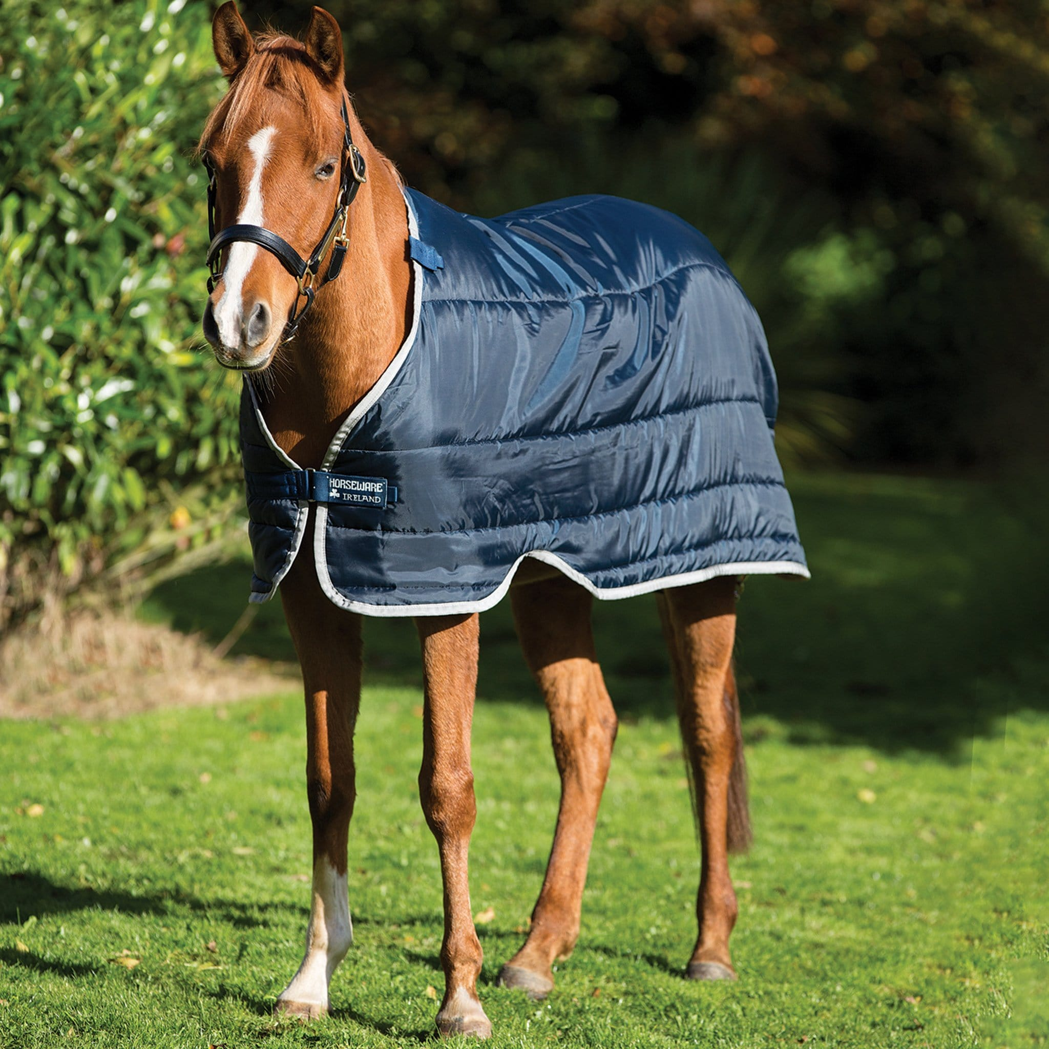 Horseware Lightweight 100g Pony Liner On Horse Front View ABADP1.